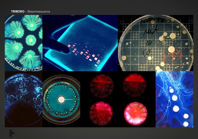 01_Bioluminescence_Moodboard_0002